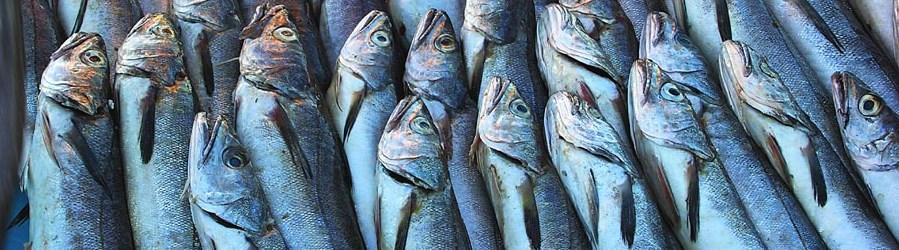 fish cutting